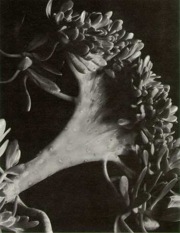 masters of photography: imogen cunningham