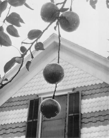 Stieglitz, Apples and Gable