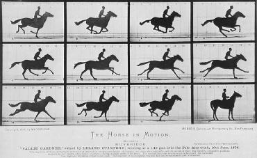 Eadweard Muybridge, Galloping Horse
