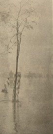 Stieglitz, Spring Showers